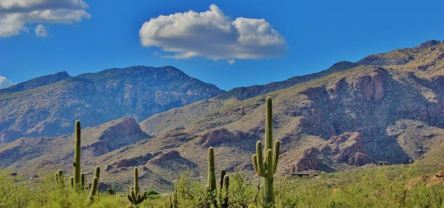 cacti and mountains